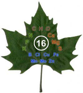Image result for ածխածին